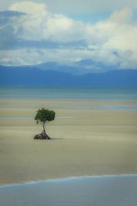 Lonely Tree 2010  Queensland Australia