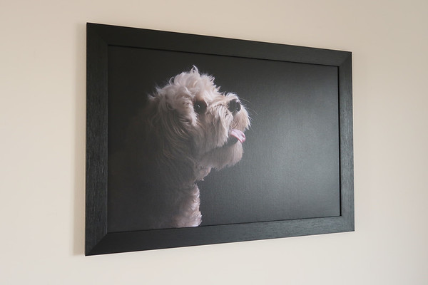 Edinburgh dog photography canvas on wall