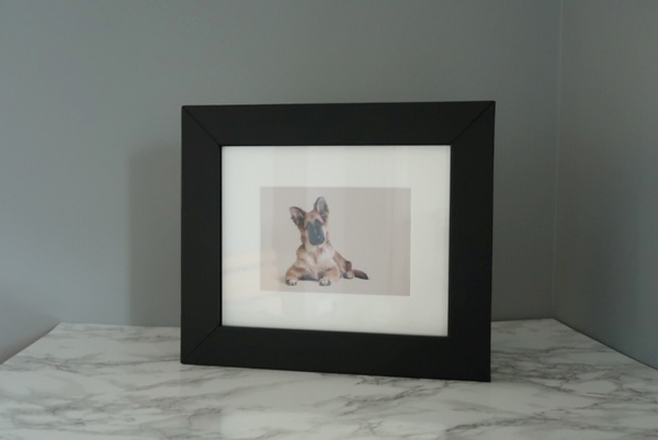 dog phototgraphy edinburgh, pet photography product photos