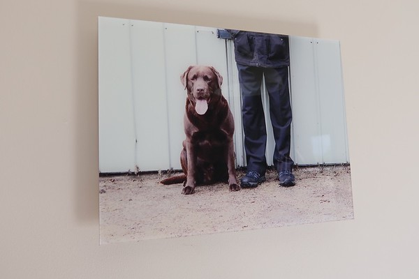 pet dog photography products acrylic wall art