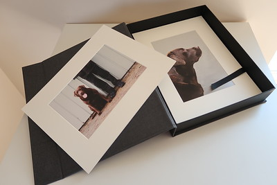 pet dog photography products folio box