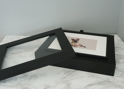 dog photography edinburgh, studio pet photography
