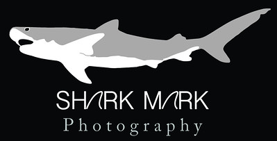 sharkmarkLogo_final
