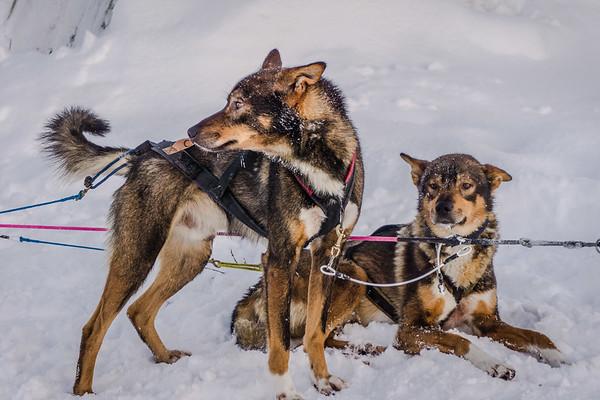Sweden, Lappland