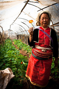 Farmer, Northern Thailand