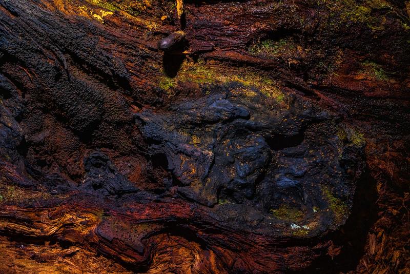 Barkscape: Sequoia Obscura #2