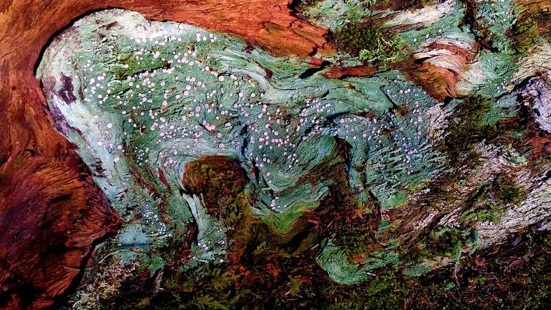 Barkscape #1, Hoh Rainforest