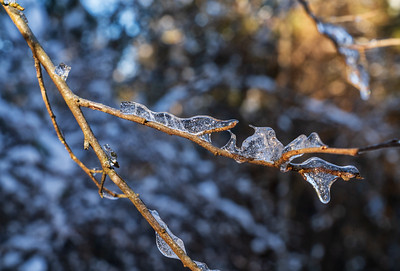 Icescapes: Morning Melt | Four Rivers Metro park