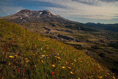 Wildflower Bloom, Mt. St Helens