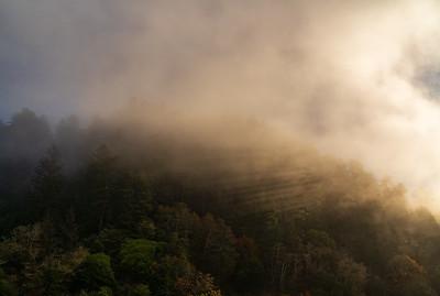 Morning Light on Redwoods, Klamath, California