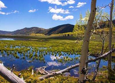Aspen Spring, Fish Lake Utah