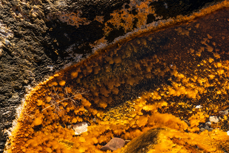 Fossil Filigree