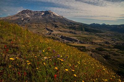 Wildflower Bloom, Mt. St Helens
