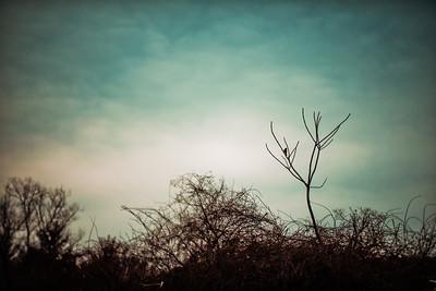 KMF_4943-Edit