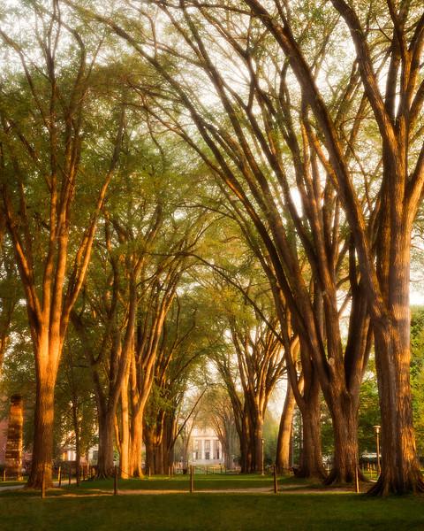 Elms of Penn State