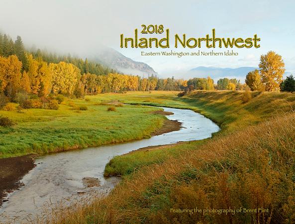 Myrtle Creek and Autumn cottonwoods, Kootenai National Wildlife Refuge, ID.