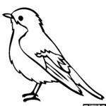 e94f89bb7df836ccc8508ff10ba05d52--bird-coloring-page-coloring-book