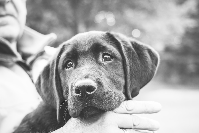 """""""Until one has loved an animal, a part of one's soul remains unawakened.""""<br /> ― Anatole France"""
