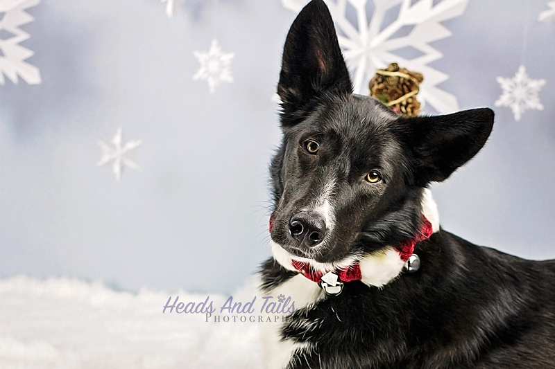 Christmas Mini Sessions at Sit Happens!
