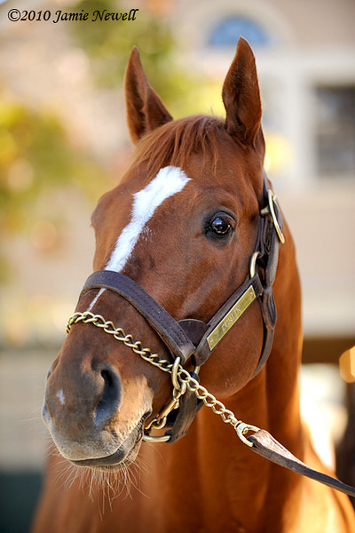 Two-time Horse of the Year Curlin stands at Lane's End in Kentucky. 11.07.2010
