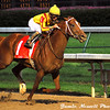 Curlin surges to victory in the Stephen Foster Handicap at Churchill Downs, June 14, 2008.