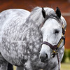 Frosted at Darley Stud