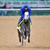 Frosted gallops in preparation for the Kentucky Derby