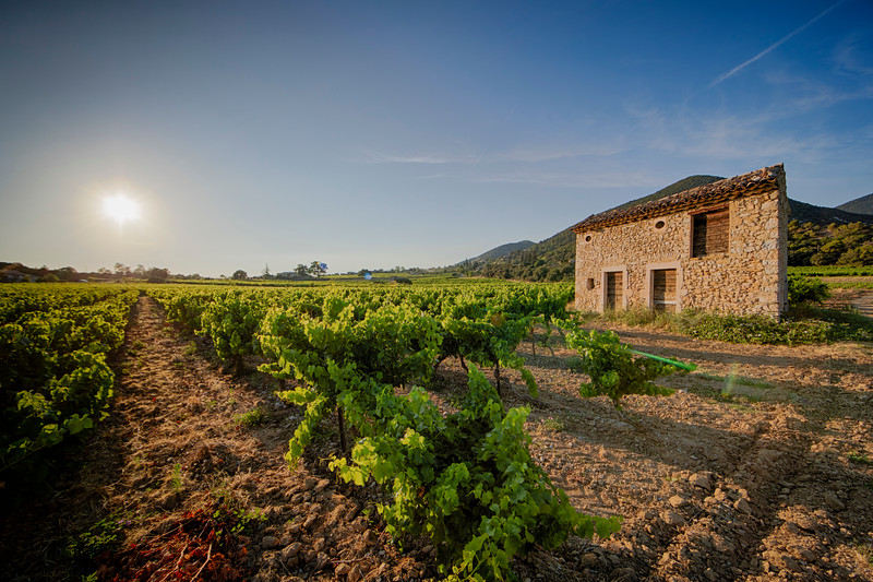 Old small stone house in the wine yards