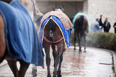 Horses' races