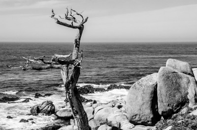 3.15.2013 - Scenes from the Monterey Peninsula