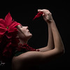 A Christmas Flower @alicia_dawn_art_model <br /> <br /> From workshop with @Matt_Schmidt_Photography<br /> <br /> #CHamiltonImages #RaleighPhotographer #NCPhotographer #theVeritasStudio #StudioPhotography #portrait #portraitphotography #photoshoot<br /> #models #modelportfolio #canonshooter