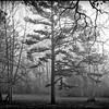 2013-01-06_FoggyMorn_1176_BW