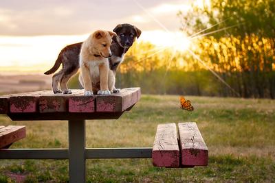 Reserve puppies near Crossfield Alberta