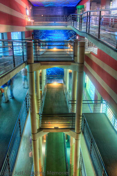 "<h3><strong>Today's Photo:  Aquarium Center</strong></h3> I have always loved the Tennessee Aquarium.  Situated in Downtown Chattanooga on the Tennessee River, this has been a great attraction for the city.  It is amazing how much just having this has revived this area of Chattanooga.  When you enter the aquarium, you travel a very long escalator to the top of the building and then begin working you way down.  The exhibit halls are around the outside of the building and there is a ramp around the inside of the building that goes by the large exhibits in the middle of the building.  This was a very difficult shot because the lighting is very low.  I did not have a tripod for this, just the handrail.  Read more at the <a href=""http://justshootingmemories.com"" rel=""nofollow"">Daily Photography Blog</a> Just Shooting Memories!..."