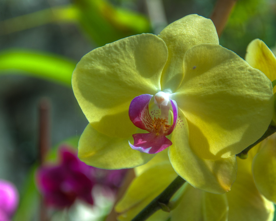 "<h3><strong>Today's Photo:  An Orchid</strong></h3> When I first got into photography, I loved to take macro photos.  Mostly of flowers and other such things.  However, I have gotten mostly away from that style of photography and have gone for landscapes.  Every once in a while, I let my wife take the camera and get a few shots.  Usually this is when I am occupied with the kids.  So, I was pleasantly surprised when I was processing photos and ran across a few macro shots.  I knew these were not mine.  By default then, they had to be my wife's.  She is always asking me to take some of her photos and process them, so I did.  This is the result.  This is an Orchid, I think, from the top of the Ocean Journey building at the Tennessee Aquarium. I think if I am not careful, She may out pace me in photographic ability.  Read more at the <a href=""http://justshootingmemories.com"">Daily Photography Blog</a> Just Shooting Memories!..."