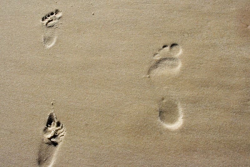 "<h3><strong>Today's Photo:  Footprints</strong></h3> I was in an ocean mood today and would have really liked to just jump in the car and go.  However, that did not happen.  Instead I decided to go through some of my old beach photos and came across this one.  It brought back the reason I started this site in the first place, to capture memories for a lifetime.  Of course, these footprints are mine and one of my daughters.  For me, there is nothing as strong to bring back memories as a photo.  Read more at the <a href=""http://justshootingmemories.com"">Daily Photography Blog</a> Just Shooting Memories!..."