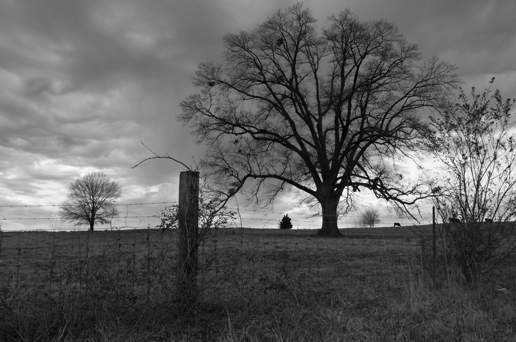 "<h3><strong>Today's Photo:  The Fence and Tree</strong></h3> I have been keeping this shot in mind for a while and was just waiting for the right time for it.  I wanted to get a good shot of a hill with a tree standing on top of it.  Anyone from the eastern United States can attest to the futility of finding a good photo of that.  I keep looking for the shot when I am out west, but never seem to find it.  Either I am in one of the enormous forests being dwarfed by the trees, or where there is not a tree for miles.  I got this one with a few good storm clouds moving along behind it.  Read more at the <a href=""http://justshootingmemories.com"">Daily Photography Blog</a> Just Shooting Memories!..."