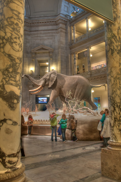 """<h3><strong>Today's Photo: The Small Elephant</strong></h3> I often wonder what it would have been like to live hundreds if not thousands of years ago. What would the world have been like with out theconveniencewe enjoy today. Instead of deciding what television show to watch or what fast foodrestaurantto eat at, it would be deciding where to set up a trap or how to farm. If you did not, you would not eat.  In the heart of the nations capital, Washington D.C., there is the Museum of Natural history. Part of the Smithsonian museums, it is home todinosaurs, ocean creatures and the hope diamond. This shot is in the atrium of the museum where you are greeted by a very large elephant. Around this atrium, there are several levels and halls leading to wonderful history.  Read more at the <a href=""""http://justshootingmemories.com"""" rel=""""nofollow"""">Daily Photography Blog</a> Just Shooting Memories!..."""