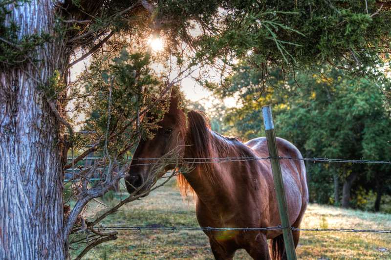 """<h3><strong>Today's Photo: The Shy Horse</strong></h3> Where I live, there are lots of horses. I usually see them all along the drive from home to work. I think every pasture in a ten mile radius has multiple horses or cows. The good thing about this, frequently, I get to see them close to the fence; where I can get a photo or two of them. Most of the time, I get a photo before they walk away. This one let me take a couple and then would duck behind the tree and hide from me.  Read more at the <a href=""""http://justshootingmemories.com"""">Daily Photography Blog</a> Just Shooting Memories!..."""