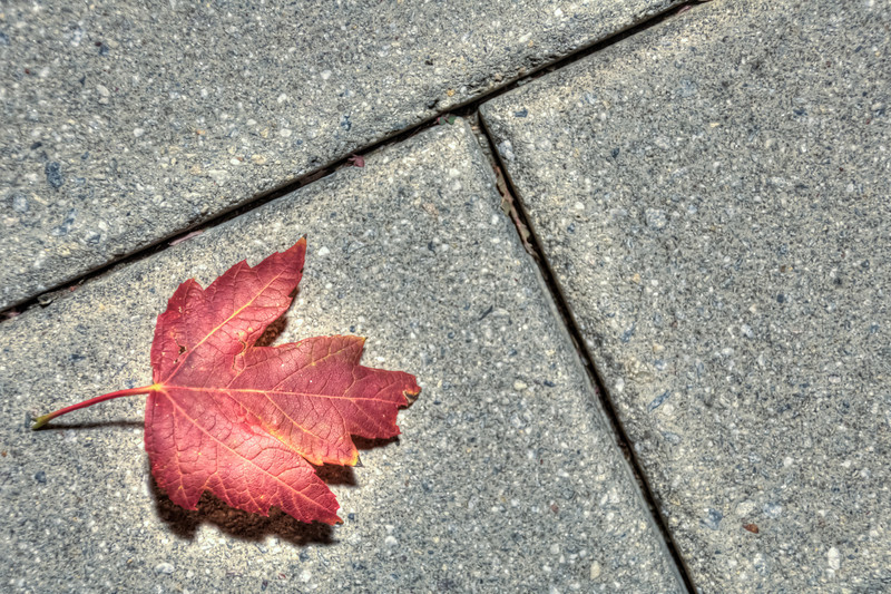 """<h3><strong>Today's Photo: The Leaf Redux</strong></h3> I finally had some time to process this other leaf photo that I took while in Chattanooga. I still don't know which I like better, but I think I am leaning toward this composition as apposed to the other <a title=""""Leaf"""" href=""""http://justshootingmemories.com/2011/10/16/leaf/"""">Leaf</a>. Any opinions? Please fell free to leave a comment.  Read more at the <a href=""""http://justshootingmemories.com"""" rel=""""nofollow"""">Daily Photography Blog</a> Just Shooting Memories!..."""