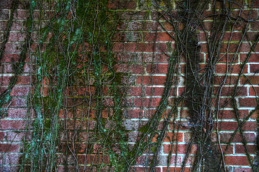 "<h3><strong>Today's Photo:  Climbing the Wall</strong></h3> I was intrigued by this wall when I first saw it.  It is on the outside of an abandoned warehouse building.  It is hard to believe that one of the walls of the building has fallen down and this wall, with its vines, has remained standing.  There are no real cool stories about this, just cool vines.  Read more at the <a href=""http://justshootingmemories.com"">Daily Photography Blog</a> Just Shooting Memories!..."