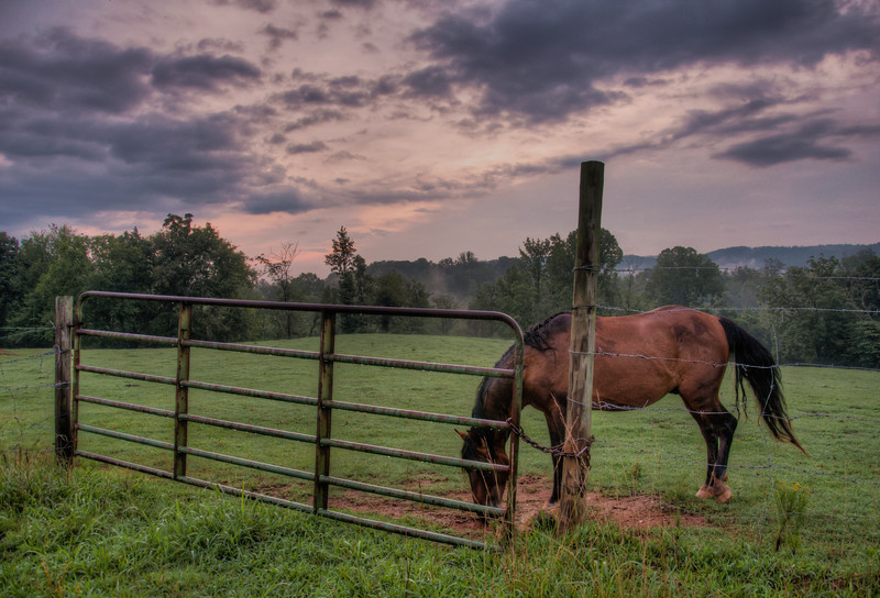 """<h3><strong>Today's Photo: Horse at the Gate</strong></h3> Once again, I ran across this horse in the local pasture. I have been trying to get a good shot of it, but every time I lift the camera, the horse either ducks behind something or puts its head down. This was one of those times, but with the fog in the background, water on the ground and a gentle sunrise beginning, I could not pass up the moment. Not to mention, I have not posted a good photo of this gate in a few days. What is happening, I must be loosing my edge.  Read more at the <a href=""""http://justshootingmemories.com"""">Daily Photography Blog</a> Just Shooting Memories!..."""