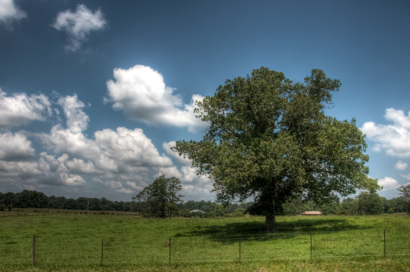 "I was taking photos this past weekend and noticed something with my image stabilized lens.  I hope to do a little testing this weekend and see if what I discovered is a repeating problem or if it was just this weekend. <h3><strong>Today's Photo:  Lonely Tree</strong></h3> This is not the first time this tree has caught my attention.  Once before, I was able to make it by here just at sunset and get a good shot <a title=""Into the Sunset"" href=""http://justshootingmemories.com/2011/03/28/into-the-sunset/"">Into the Sunset</a>.  I find it hard to get good trees around here that stand all by themselves.  Maybe I just need to find a good tree and cut down all the ones around it.  Nah, that would be too much work.  Read more at the <a href=""http://justshootingmemories.com"" rel=""nofollow"">Daily Photography Blog</a> Just Shooting Memories!..."