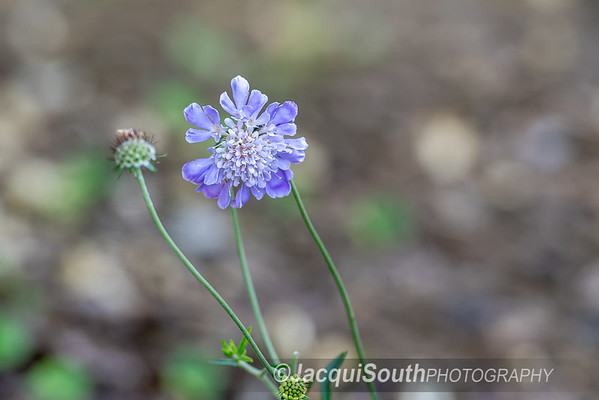 6/18/2017 - Garden, ©2017 Jacqui South Photography