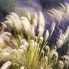 Lavender and Grass abstract
