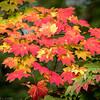 Autumn Colour IV