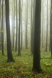 Beech wood, Slovenia