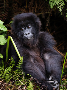 RichardTerborg_RwandaAnimals50
