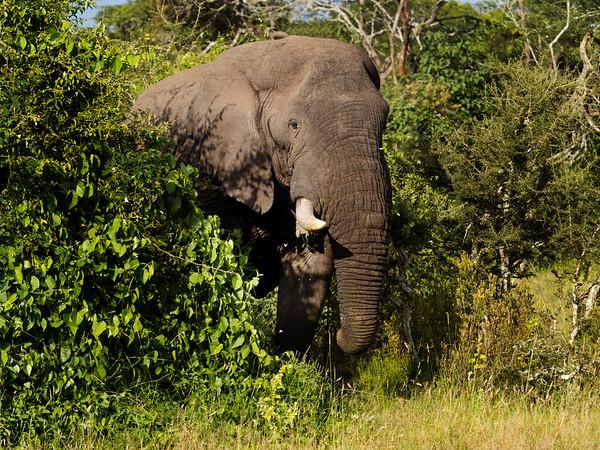 RichardTerborg_RwandaAnimals24