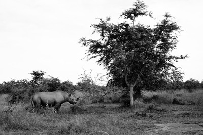 RichardTerborg_RwandaAnimals17